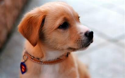 Dog Adorable Inspirationseek