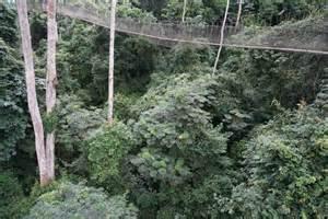 Kakum National Park Rope Bridge