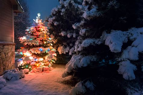 brightly lit snow covered christmas tree outdoors  night