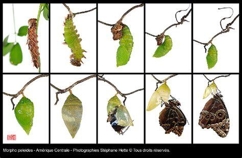 photographier les papillons avec st 233 phane hette