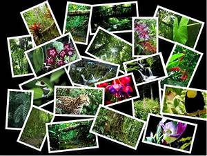 Rainforest Collage | Kelsey Mintz's Blog