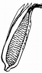 Corn clipart 5 - Clipartix