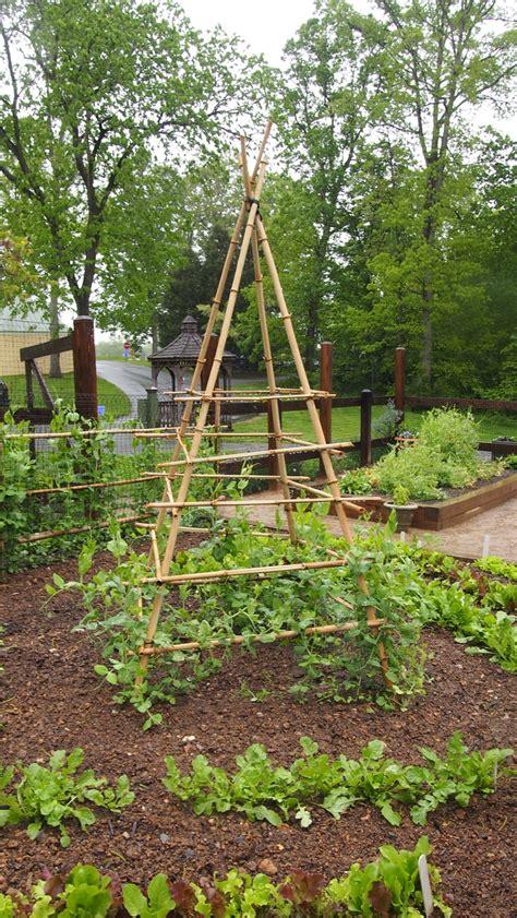 garden trellis ideas photograph bean trellis at