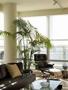 Große Pflanzen Fürs Wohnzimmer : palmen f rs wohnzimmer die das zimmer zweifellos erfrischen ~ Michelbontemps.com Haus und Dekorationen