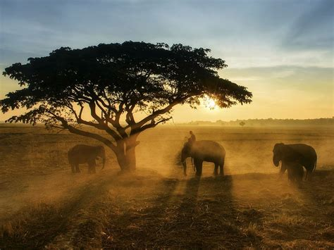 Elephants And Sunrise Image, Thailand National