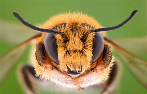 Bienen Und Wespen Im Fensterrahmen » Ursachen & Abhilfe