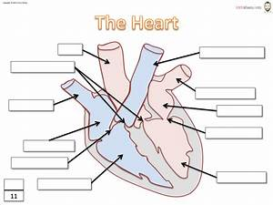 Heart Diagram To Label Diagram  Label Heart Diagram Worksheet Answers