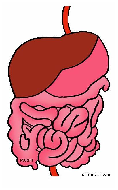 Digestive Organs Clipart Systems Science System Tract