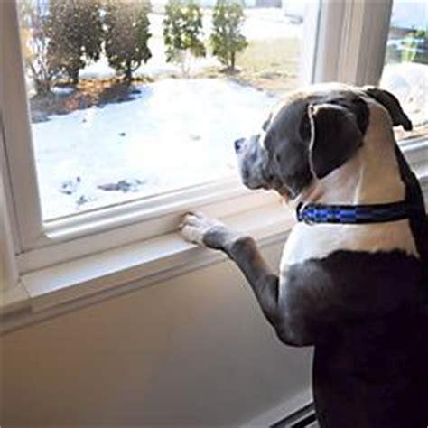 Window Sill Protector by Window Sill Protector 1800petsupplies