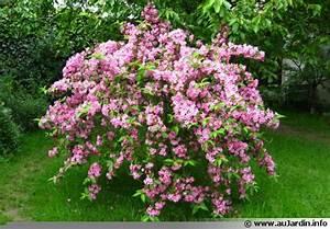 Arbuste Persistant Croissance Rapide : jardin alsace vignoble ~ Premium-room.com Idées de Décoration