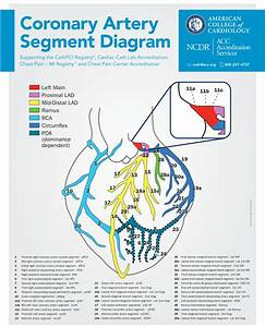 Coronary Anatomy Diagram Poster Request Form