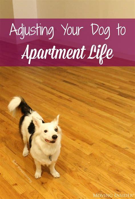 dog training tips articles images  pinterest