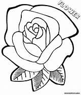 Flower Coloring Pages Print Colorings sketch template