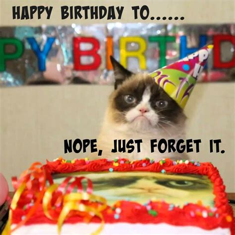 Grumpy Cat Meme Happy Birthday - mommy reality 31 a room with a view jenerally informed