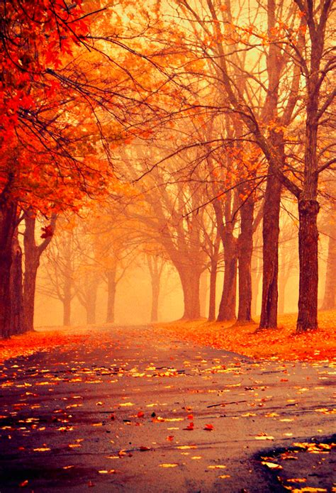 Autumn Wallpapers For Iphone by Scenery Wallpaper Fall Foliage Iphone Wallpaper