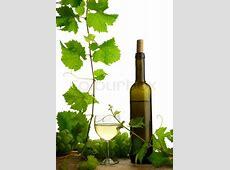 White wine still life with fresh grapevine on white