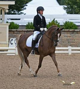 New Jersey Riders Win At National Dressage Pony Cup