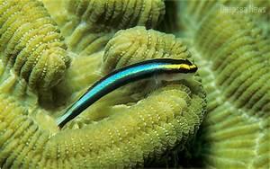 Tiny Deep sea fish– Deep sea waters News Underwater Animals