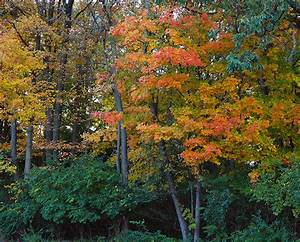 Forest fungi boost invasive plants, choke out native ...