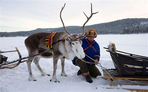 swedish reindeer herders win historic land  case