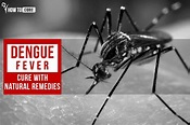 Dengue Fever Cure with Natural Remedies - Signs And ...