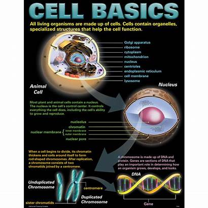 Poster Cells