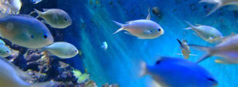 fishes aquatic invertebrates virginia aquarium