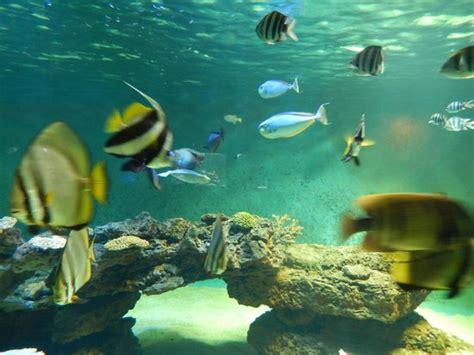 meuble de cuisine cing aquarium du 7eme continent 28 images l aquarium 171 le