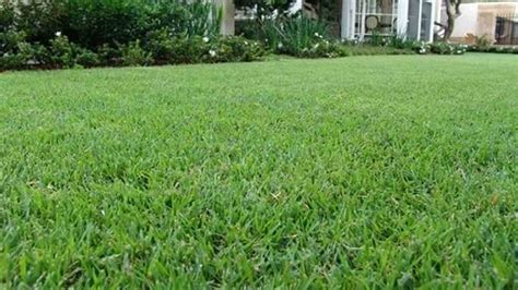 Types Of Grass For Florida