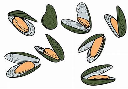 Mussel Vector Drawing Illustration Shell Sea Seafood
