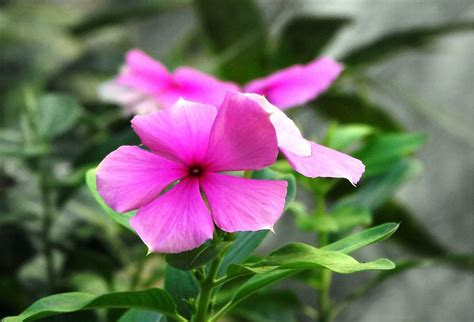 small pics of flowers file small flower jpg