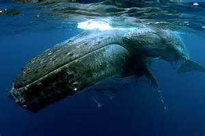 クジラ:クリックで拡大