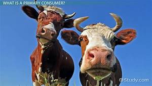 Primary Consumers: Definition & Examples - Video & Lesson ...