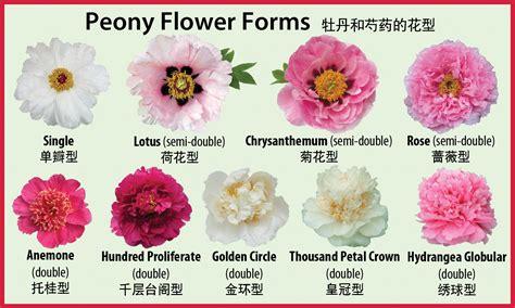matelic image flower identification chart