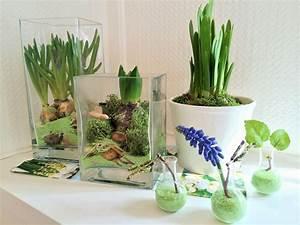 Blumen Für Fensterbank : der vorfr hling auf der fensterbank wir lassen blumen vortreiben die angelones der ~ Markanthonyermac.com Haus und Dekorationen
