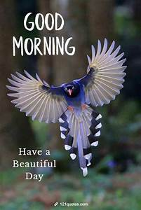 30  Beautiful Good Morning Images With Birds  Uf99c