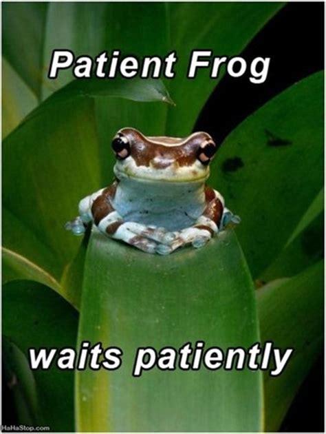 Patient Frog Picture   Lots of Jokes