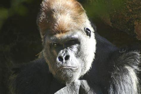 hermosas especies de animales en peligro de extincion