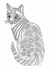 Coloring Cat Pages Adults Adult Printable Getcolorings sketch template