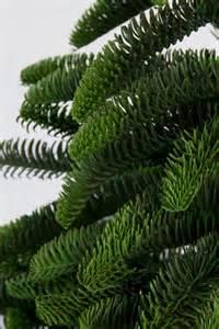 Tannenbaum Christmas Tree by Nobilis Fir Tree 210cm 100 Pe Plastic Mold Artificial