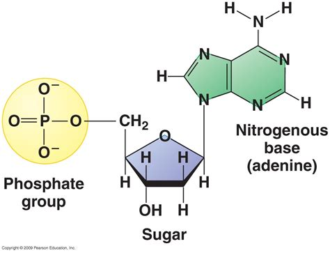 What Are The Three Parts Of A Nucleotide?