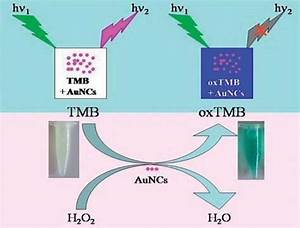 Schematic Diagram Of Detection Of H2o2 Using The