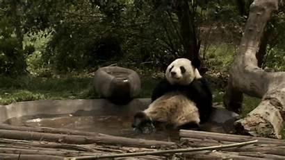 Panda Peace Quiet Popsugar Wanted Pool Gifs