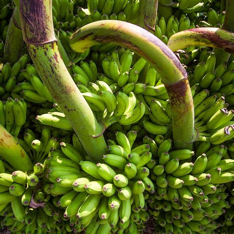 agricultural equipment manufacturer in maldives organic products agriculture fisheries maafahi products maldives