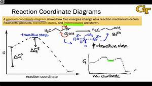 04 02 Reaction Coordinate Diagrams And Stability Trends