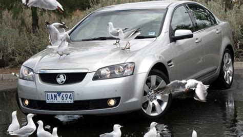 bird droppings dont corrode paint car news carsguide