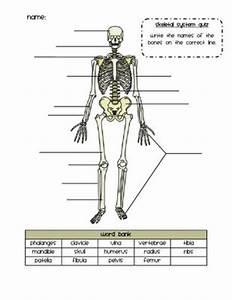 Skeletal System Quiz   7th Grade- Life Science   Pinterest ...