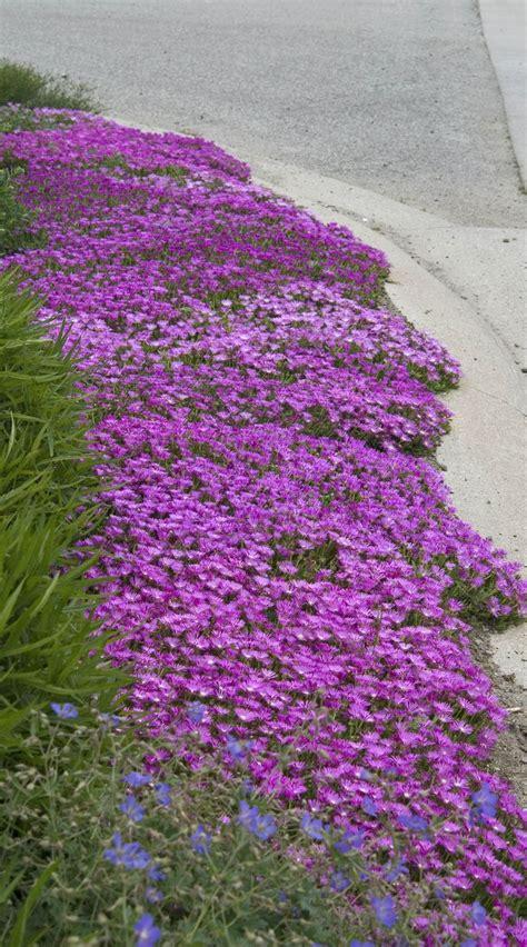 perennial shrubs sun top 25 ideas about gardening groundcover on pinterest sun border plants and perennials