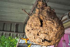 Kosten Wespennest Entfernen : wespennest entfernen lassen welche kosten entstehen ~ Watch28wear.com Haus und Dekorationen