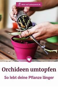 Orchideen Umtopfen Video : orchideen umtopfen tipps und tricks damit die pflanzen ~ Watch28wear.com Haus und Dekorationen